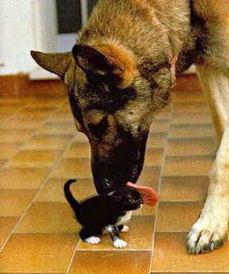 doglickingcat_jpg.jpg