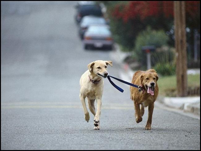 dogwalk.jpeg