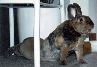 bunny7.jpeg