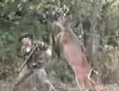 deerreve.jpg