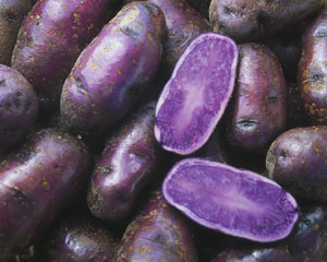 potatoblue1.jpeg