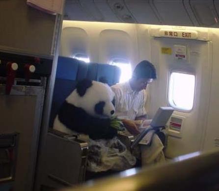 pandaflight.jpg