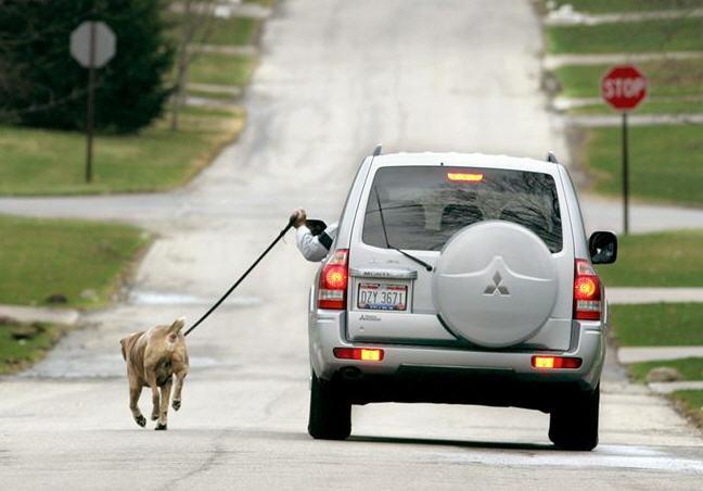 dog20walking.jpg