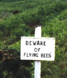 runningbees.jpg