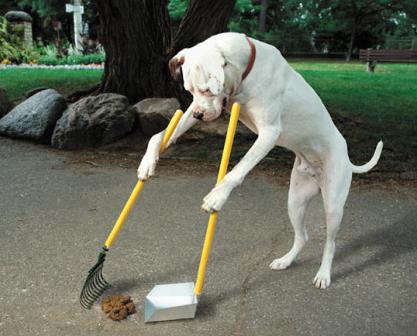 dogscooppoop2.jpg