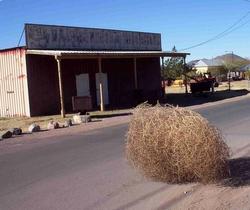 tumbleweed.jpg