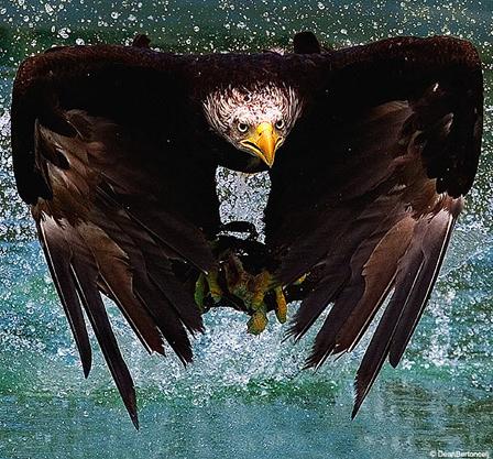eaglepics.jpg