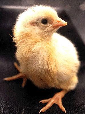 egg19.jpeg