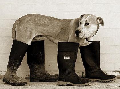 puppydogboots43.jpg