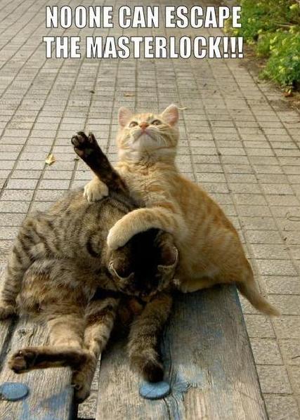 catwrestignsfgda1.jpg