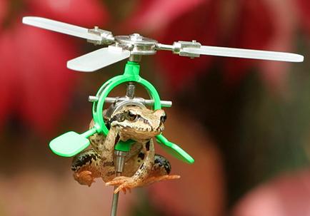 flyingfrogsd1.jpg