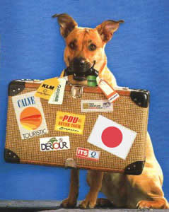 pet_travel_dog3.jpg