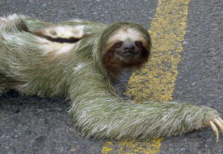 slothweird3.jpg
