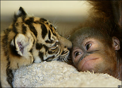 Cute Pics Of Monkeys. cute animal tigers monkeys