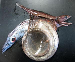20071009_1_localfishstory.jpg