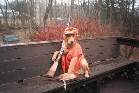 huntingdogafdadf.jpg
