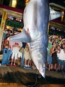 shark_flpla102.jpg