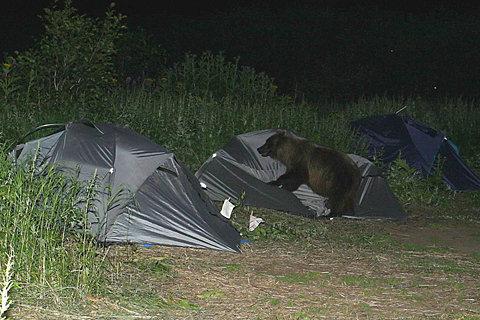 bearcamping.jpg