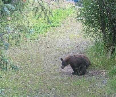 bearcrapwoodsfad.jpg