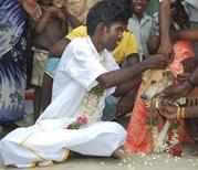 india_man_weds_dog_mas101.jpg