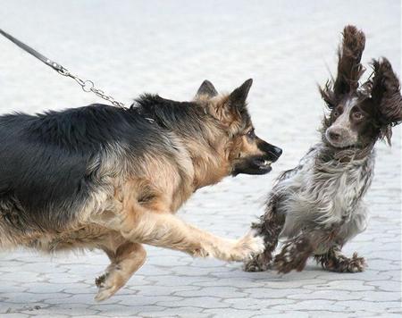 doggiehelloaf.jpg