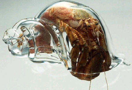 hermitcrabglasshell.jpg