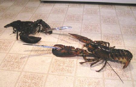lobsterfightafasd.jpg