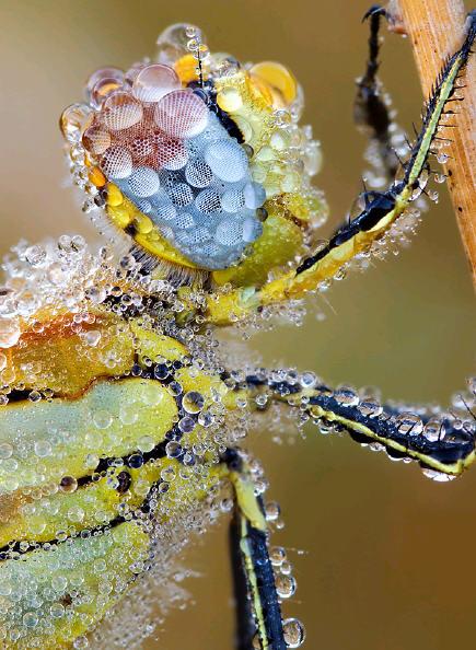 dragonflydewcoverdasdf.jpg