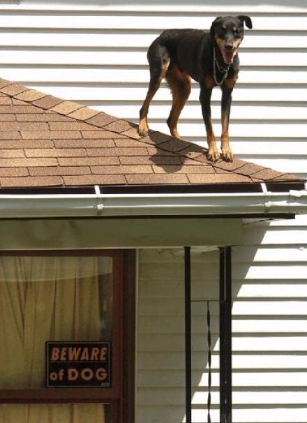 overheaddogfaa.jpg