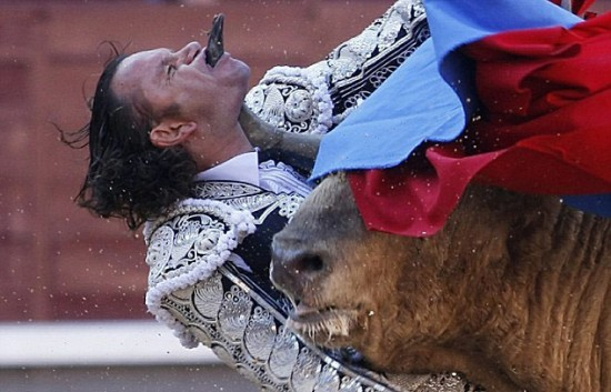 bull-through-mouth-550x353.jpg