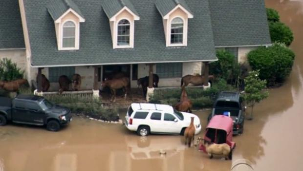 floodhosuehorses
